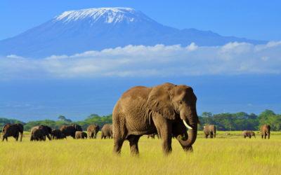 Viaje en grupo a Kenia. Safari y playas de Mombasa. Del 17 al 26 de Agosto 2021